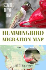 2017 Hummingbird Migration Chart 2019 Hummingbird Migration Map Find Out When To Expect