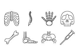人間の骨画像 素材材料ダウンロード 完全無料の背景 無料 イラスト素材