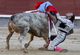 bull fighting injuries. Delighful Fighting Bullfighting Injuries To Bull Fighting