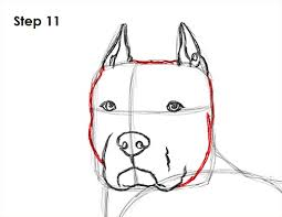 pitbull dog face drawing. Fine Drawing Draw Pit Bull 11 And Pitbull Dog Face Drawing G