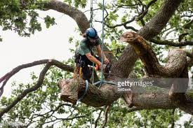 3,763 Tree Removal Photos and Premium High Res Pictures - Getty Images