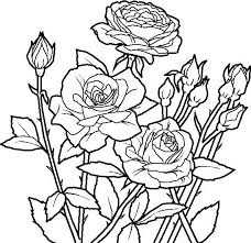 free printable roses coloring pages for kids garden coloring pages of flowers rose