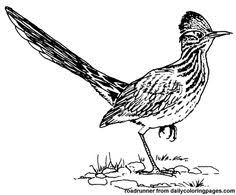 Small Picture Road Runner bird coloring page Coloring Pages Pinterest Road