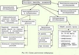 Туберкулез Схема диагностики туберкулеза