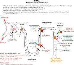 Thiazide Diuretic Dosing Chart