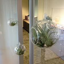 Small Picture Unusual Air Plants Home Decoration Inspiration Ideas and Gifts