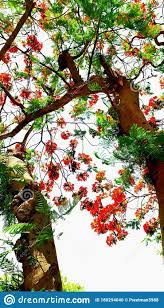 Beautiful Flower Tree Hd Wallpaper For ...
