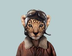 zoo animals in clothes.  Animals 5 Leopard Cub Intended Zoo Animals In Clothes P