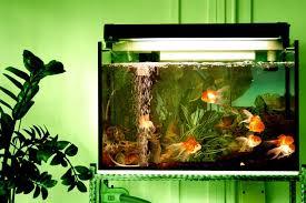 Goldfish Feeding Chart Determining How Much To Feed Aquarium Fish