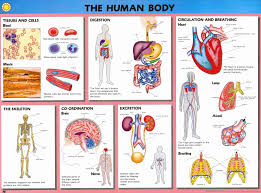 Biology Chart Buy Human Biology Wallchts Pack 10 Human Biology W Charts