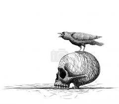 Vektorová Grafika Raven Pták Okouna Na Lebku Izolované Na Bílém