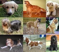 Dog Wikipedia