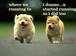image of two puppies running