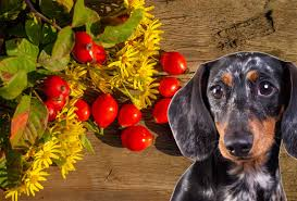 Hunde müssen es schritt für schritt lernen, die treppen richtig zu benutzen. Hagebuttenpulver Fur Hunde Wirkung Und Dosierung Beim Vierbeiner