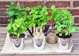 how to start an herb garden this summer