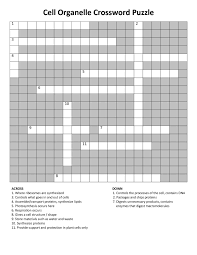 Blank Crossword Template Crossword Puzzle Template Printable New Respiratory Crossword 20