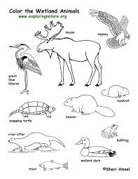 Excellent Resource For Biology School Stuff Animal Coloring