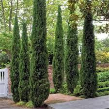Trees For Home Garden