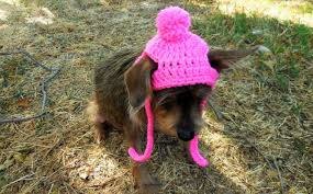 Free Easy Crochet Pattern For Small Dog Sweater