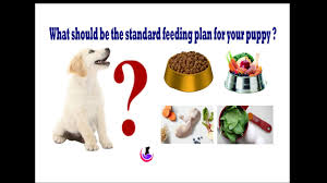 Puppy Food Plan In Hindi