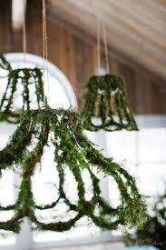 Diy Mit Dem Weihnachtsstern Pflanzenfreude