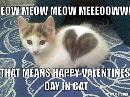 Image result for happy valentines day cat images