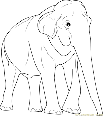 Small Picture Male Asian Elephants Coloring Page Free Elephant Coloring Pages