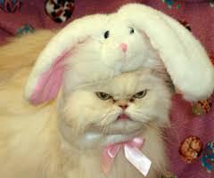 cute kittens in halloween costumes. Modren Halloween 10 Cats Not Impressed With Their Halloween Costumes This Year To Cute Kittens In S
