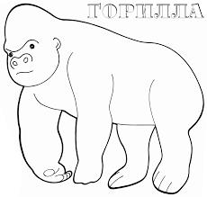 Gorilla Ausmalbilder Dekoking Com 2