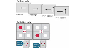 Schematic Illustration Of The Two Fmri Tasks A Tracking