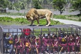 zoo animals in cages. Interesting Animals For Zoo Animals In Cages R