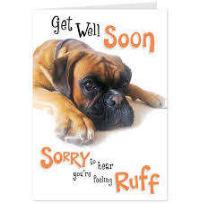 Get Well Dog Pictures Sorry Youre Feeling Rough Get Well Card