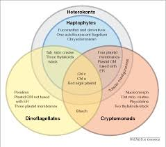 Venn Diagram Of Mitochondria And Chloroplasts Figure 2 From Recycled Plastids A Green Movement In