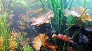 Aquarium Kopen Dit Moet Je Weten Tips