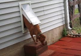 endura flap wall mount dog door by