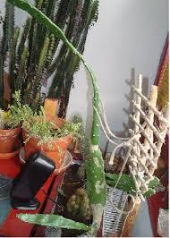 .betreibt eine interessante tägliche nachrichtenseite, die man abonnieren kann. Kakteen Hangen Schlaff Am Boden Pflanzenkrankheiten Schadlinge Green24 Hilfe Pflege Bilder