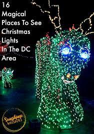 brookside gardens garden lights