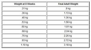 Yorkie Growth Chart In Kg Chihuahua Growth Chart Metric Units Chihuahua Puppies