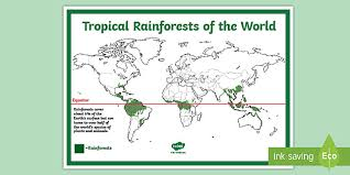 You won't find creatures like this anywhere else under the sun! Free Rainforest Map Ks2 Reference Sheet Teacher Made