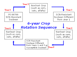 Management Of Scn Soybean Cyst Nematode Www Soybeancyst Info