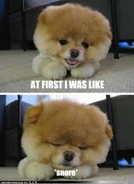 puppy memes | Tumblr via Relatably.com