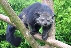 Images & Illustrations of bear cat