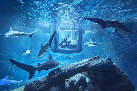 awesome bedrooms. Airbnb Launches First Underwater Bedroom And It Looks F*cking Awesome 32A29F5F00000578 3513560 For Three Bedrooms