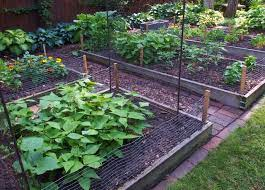 rotate crops in your small garden umn