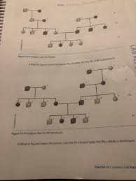 Solved Iv Figure 13 3 Pedigree Chart For Freckles Ure Mea