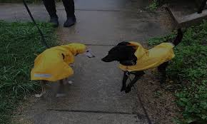 Top 10 Best Dog Raincoats Pet Product Reviews For 2019