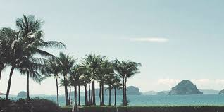 Palm trees tumblr header Background Laptop Tumblr Dont Repost Please Tumblr Palm Trees Header Tumblr