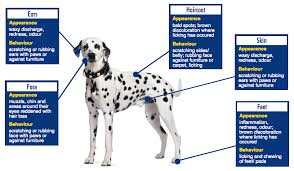 Dog Allergies? Treating Itchy Skin Allergies in Dogs