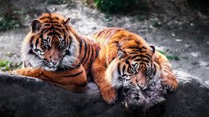 beautiful hd wallpapers of animals. Wonderful Animals Beautifulanimalswallpapersfordesktop By Billion Photos And Beautiful Hd Wallpapers Of Animals U