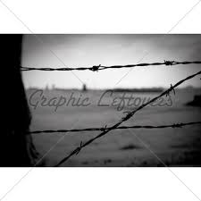 barbed wire fence concentration camp. Barbed Wire Fence In Concentration Camp N